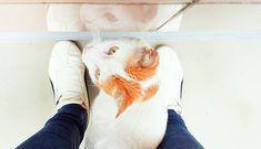 Reposting @faith_starlily: Reflection #catbetweenmylegs  #reflection #cats #pet #pets #catlover #catoftheday #siblings #beautyside #cat #貓 #neko #gato #petstagram #adorable #catstagram #meow #sweet #gingercat #catsofinstagram #instacat #beautiful #love #instagramcats #cute #paws #tabby #petlove #play #closeup