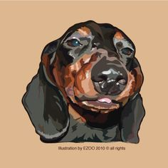 Dachshund Clube Buddy Love, Dachshund Art, Dog Art, Pet Portraits, Crazy Cats, Dog Pictures, All Dogs, Dachshunds, Sausages
