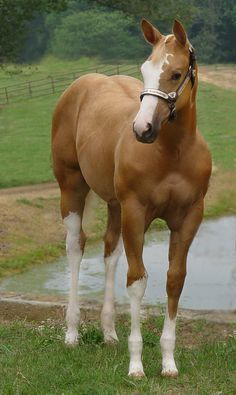 Top 5 Most Beautiful and Expensive Horse Breeds