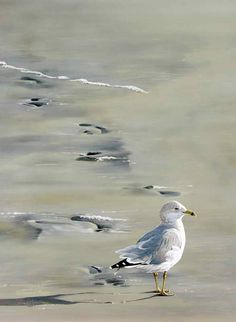 Footprints by Wildlife Artist Danny O'Driscoll
