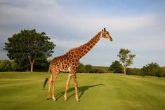The Hans Merensky Golf Estate Phalaborwa Limpopo South Africa. On the golf course. Famous Golf Courses, Public Golf Courses, Golf With Friends, Coeur D Alene Resort, Augusta Golf, Golf Estate, Golf Course Reviews, Golf Attire, Golf Tips For Beginners