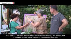 Festa delle salvie a Il lavandeto di Assisi, anticipazione [UMBRIA NEWS]