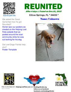 Helping Lost Pets  Dog  Labrador Retriever  Back Home  Happy