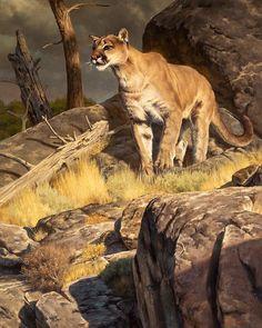 The Art of Dustin Van Wechel is an online gallery showcasing the work of award-winning American artist, Dustin Van Wechel. Wildlife Paintings, Wildlife Art, Animal Paintings, Big Cats Art, Cat Art, Goten Y Trunks, Lion Art, Mountain Lion, Outdoor Art