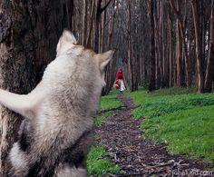 Wolf-Red-Riding-Hood-Джон Лунд (John Lund)