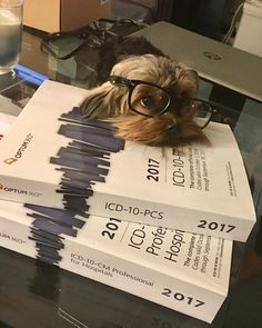 Mommy, learning ICD 10 is hard. Can I just play outside?   Found at: https://itsayorkielife.com/laurens-coco/  #Yorkies,#YorkshireTerrier,#Yorkielove,#ItsaYorkieLife