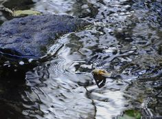 Water Abstract by Debby Pueschel