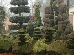pearl fryar topiary garden - Google Search