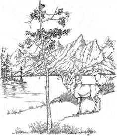 Wyoming Printables: Wyoming Coloring Page - Grand Teton National Park Coloring Pages Nature, Free Adult Coloring Pages, Animal Coloring Pages, Coloring Pages To Print, Coloring Book Pages, Grand Teton National Park, National Parks, Bird Pencil Drawing, Seattle Vacation