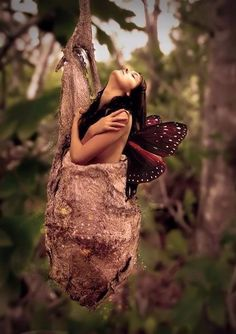 Transformation from a cocoon to a beautiful butterfly. A Course In Miracles, Portraits, Faeries, Solitude, Spirituality, Photos, Pretty, Photography, Beauty