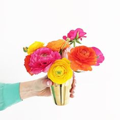 ranunculus arrangement and gold vase. Pretty! I should buy some colorful fake flowers since I don't have a green thumb.