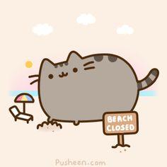 Y aquí mi pequeña colección de Gifs de Pusheen Cat:                                                                                        ...