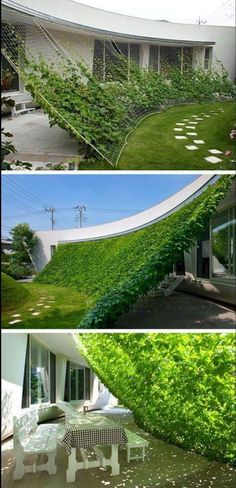 The coolest way EVA to get some summertime shade! There are numerous fast growing (and blooming) vines that could be used for this project.