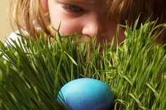 Good Egg Hunts: Easter Hunts and Activities for Kids in Greater Seattle and the South Sound - ParentMap