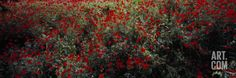 Poppy Flowers in a Field, Sangzor, Uzbekistan Photographic Print by Panoramic Images at Art.com Bedroom
