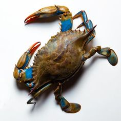 Follow the rule of claw when buying crabs