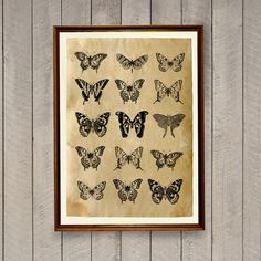 Butterflies print in antique style. Lovely old paper, nice antique art for your home. Cabin poster printed on handmade antique paper. 8.3 x 11.7 inches