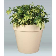 "Allied Molded Products Vista Round Pot Planter Color: Laguna, Size: 18"" H x 48"" W x 43"" D"