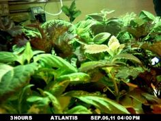 29 Best Hydro in Action images in 2013 | Hydroponics