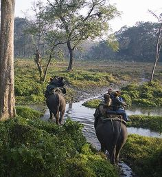 Elephant Safari India - Enjoy elephant safari in India national parks, elephant back safaris in India. Inquire today about our various adventure elephant safari in India Elephant Ride, Tanzania Safari, Amazing India, Wildlife Safari, Wildlife Park, India Tour, African Safari, Adventure Is Out There, Adventure Time