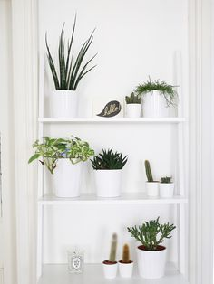 Houseplants To Fill Your Home With.