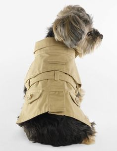 Desired: Ralph Lauren Dog Trench Coat | The Terrier and Lobster