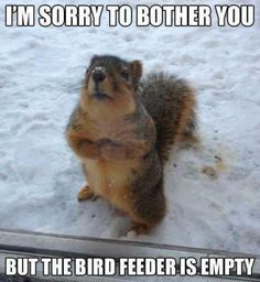 I can so see squirrels doing that in the future! He he he he!