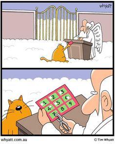 Cats nine lives.