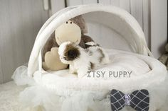 Honey - Female Teacup Shih-Tzu Available | Itsy Puppy - Teacup and Microteacup Puppy Breeder