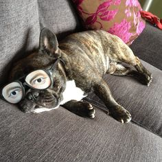 This Frenchy thinks Nobody knows he's really Sleeping! Cute French Bulldog.