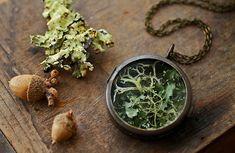 Irischen Flechten Halskette, Terrarium Medaillon Anhänger, Medaillon, reale Anlage Probe, Irisch Moos Terrarium Natur Leben inspiriert #C6