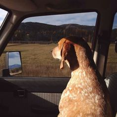 Co-pilot Maddie the coonhound!
