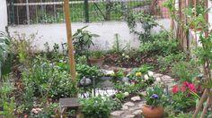 Su bakışları olduğu kadar bitkileri de kendine çekiyor.(Mayıs 2011)