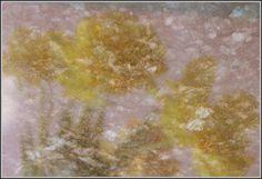 Tulip Reflection on Granite