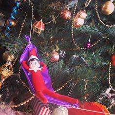 Just hangin' around #elfie #elfonashelf