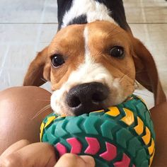 """""""C'mon mama, play with me! You were out the whole day. You owe me. """""""