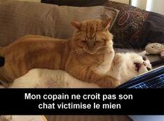 30 Snap de chats à mourir de rire - page 5
