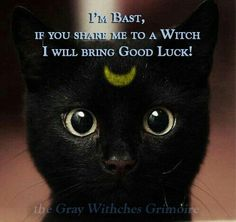 I'm Bast, If You Share Me To a Witch I Will Bring Good Luck...)O(
