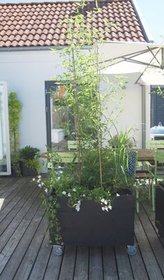 This post contains the most attractive DIY mobile garden ideas. These ideas will allow you to have a moveable decorative garden. Diy Garden, Garden Design, Diy Mobile, Home Projects, Pool Area, Garden Inspiration, Swimming Pools, Indoor, Outdoor Inspirations