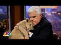 Jay Leno welcomed animal expert Dave Salmoni and his lions on Friday night photo