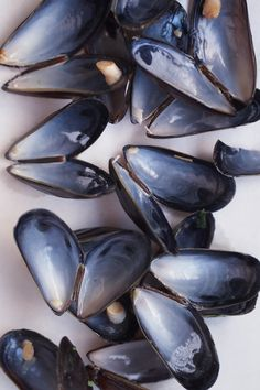 June called them black butterfly shells. She could never find them in one piece on the beach but he found one for her.   From June's Lace in the anthology Beach Season.