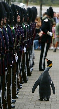 ♥! I don't understand why the penguin is standing there, however, Its cool just the same!