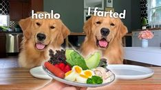 Brain Training For Dogs Animal Jokes, Funny Animal Memes, Dog Memes, Cute Funny Dogs, Cute Funny Animals, Cute Baby Animals, Minions, Chien Golden Retriever, Cute Animal Pictures