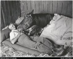 Reckless - ThebBond between a man and his horse. Racehorse trainer Tommy Woodcock with his champion racehorse Reckless on the night before running second to Gold and Black in the Melbourne Cup of 1977 Pretty Horses, Horse Love, Beautiful Horses, Animals Beautiful, Simply Beautiful, Animals And Pets, Cute Animals, Melbourne Cup, Racehorse