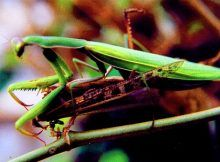 Embrace Life Quotes, Do Ho Suh, Types Of Reading, Beautiful Places, Beautiful Pictures, Praying Mantis, Cute Eyes, Editing Pictures, Types Of Art