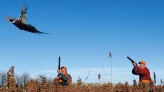 Experts Pheasant Hunting Tips Waterfowl Hunting, Coyote Hunting, Pheasant Hunting, Hunting Tips, Archery Hunting, Hunting Stuff, Saltwater Fishing, Kayak Fishing, Livestock Water Tanks