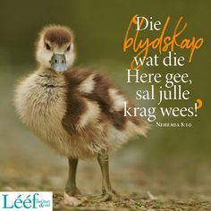 Afrikaans Quotes, Living Water, Bible For Kids, Godly Woman, Positive Quotes, Spirituality, Faith, Animals, Girlfriends