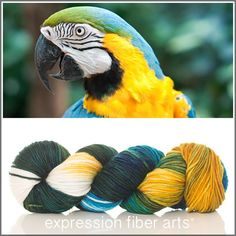 Expression Fiber Arts, Inc. - BLUE AND YELLOW MACAW SUPERWASH DEWY DK yarn - a stunning mix of teal, gold, mottled green and ivory, $23.00 (http://www.expressionfiberarts.com/products/blue-and-yellow-macaw-superwash-dewy-dk.html)
