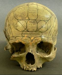 Phrenological Skull (Drawing on human skull, 19th century) | A quasi-medical artifact of phrenology, the 19th-century pseudo-science positing that bumps on the head reflect the underlying shape and functionality of the brain, dividing the skull into regions that control specific aspects of one's organs and personality