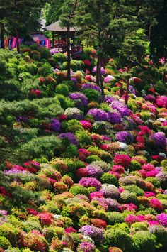 Interesting… Azaleas are smaller in Japan? Azaleas in full bloom - Shiofune Kannon Temple, Ome, Tokyo, Japan Beautiful World, Beautiful Places, Most Beautiful Gardens, Beautiful Gorgeous, Absolutely Stunning, Amazing Places, Azalea Bush, Parcs, Dream Garden